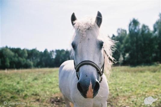 PRAMOGAUTOJAI IŠBANDO: jodinėjimas žirgais