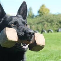 3 šuns dresūros pamokos + konsultacija