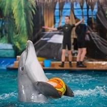 Kelionė į delfinariumą ir ekskursija