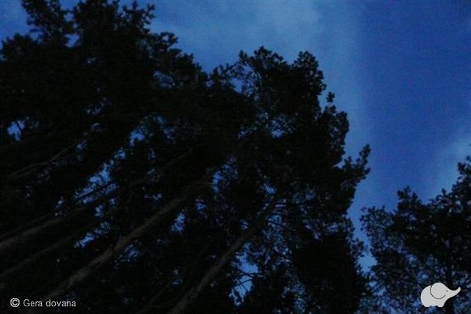 Paklaidinimas miške dviem