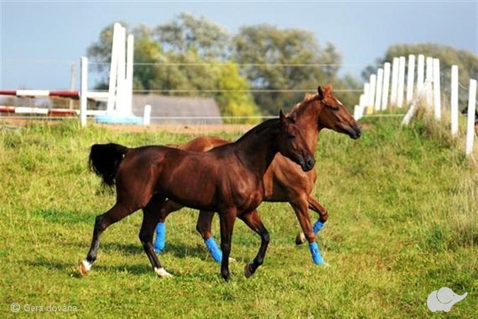 Žygis žirgais po Panevėžio apylinkes