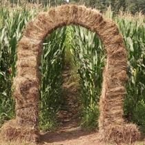 Pramogos kukurūzų labirinte