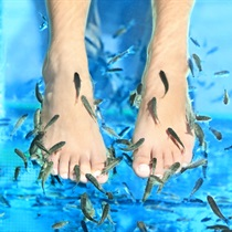 Kangalo žuvyčių SPA kojoms