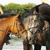 Jodinėjimas žirgais Prienų raj. dviem