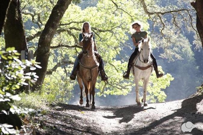 Jodinėjimas žirgais po Anykščių apylinkes