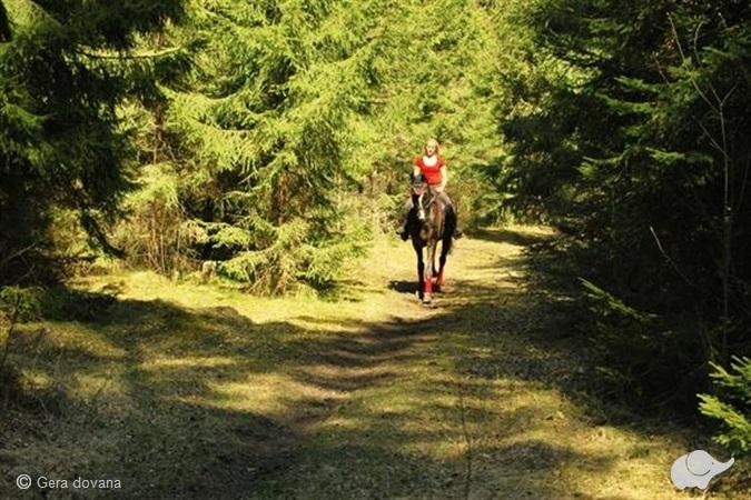 Jodinėjimas žirgais po Palangos apylinkes